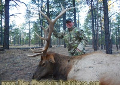 New Mexico Guided Elk Hunt | Blue Mountain Outfitters